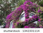 pink flowers plaited the house. ... | Shutterstock . vector #1342331114