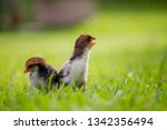 beautiful and adorable little...   Shutterstock . vector #1342356494