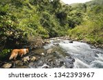 a dog is making company to a...   Shutterstock . vector #1342393967