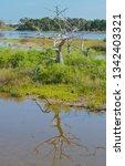 sawpit creek at big talbot...   Shutterstock . vector #1342403321