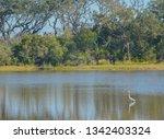 sawpit creek at big talbot...   Shutterstock . vector #1342403324