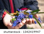 blue snowdrops on the palms of... | Shutterstock . vector #1342419947
