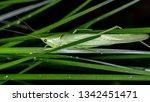 coneheads  subfamily...   Shutterstock . vector #1342451471