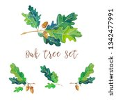 watercolor set with oak twigs... | Shutterstock . vector #1342477991