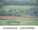 green landscape of the valley... | Shutterstock . vector #1342509881