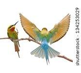 couple of bee eater bird | Shutterstock . vector #134253029
