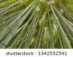 bamboo grove in kyoto  japan   Shutterstock . vector #1342552541