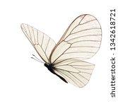 beautiful white butterfly... | Shutterstock . vector #1342618721