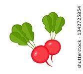 radish vegetables icon vector... | Shutterstock .eps vector #1342725854