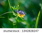an argent and sable moth on a...   Shutterstock . vector #1342828247
