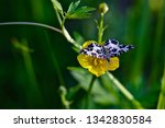 a close up of an argent and...   Shutterstock . vector #1342830584