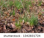 close up of clumps of wild... | Shutterstock . vector #1342831724