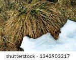 bright yellow dry grass one... | Shutterstock . vector #1342903217
