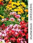 Colorful Flower Garden...