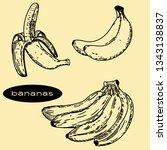 vector hand drawn of bananas. | Shutterstock .eps vector #1343138837