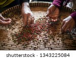 farm workers sorting and... | Shutterstock . vector #1343225084