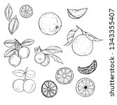 hand drawn fruits on white... | Shutterstock .eps vector #1343355407