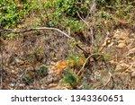 Plants On Layered Rocks