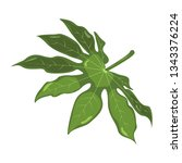 aralia. tropical leaves.... | Shutterstock .eps vector #1343376224