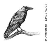 Hand Drawn Crow Isolated On...