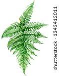 green leaf of fern on an...   Shutterstock . vector #1343412011