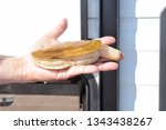 washington razor clam | Shutterstock . vector #1343438267