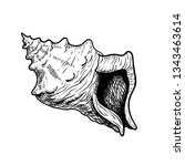 sea shell conch. hand drawn... | Shutterstock .eps vector #1343463614