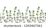 seamless pattern of thyme....   Shutterstock . vector #1343467361