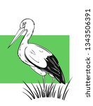 hand drawn white stork  ciconia ... | Shutterstock .eps vector #1343506391