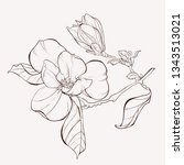 sketch floral botany collection.... | Shutterstock .eps vector #1343513021
