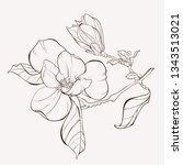 sketch floral botany collection.... | Shutterstock .eps vector #1343513021