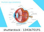 human eye anatomy. structure.... | Shutterstock .eps vector #1343670191