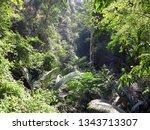 green and freshness of trees...   Shutterstock . vector #1343713307