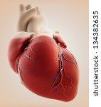 hman heart   3d render   Shutterstock . vector #134382635