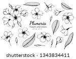 collection set of plumeria...