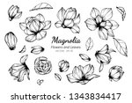 collection set of magnolia... | Shutterstock .eps vector #1343834417