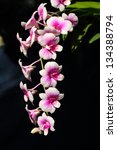 pink orchid flowers.   Shutterstock . vector #134388794