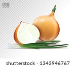 vector fresh onion with green... | Shutterstock .eps vector #1343946767