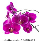 Blooming Purple  Orchid...