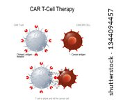 car t immunotherapy. artificial ... | Shutterstock .eps vector #1344094457