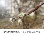 spring orchard tree blooms.... | Shutterstock . vector #1344128741