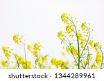 cole flowers background   Shutterstock . vector #1344289961