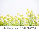 cole flowers background   Shutterstock . vector #1344289964