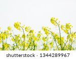 cole flowers background   Shutterstock . vector #1344289967