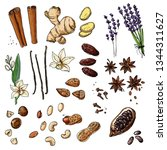 nuts and spices line drawn on a ... | Shutterstock .eps vector #1344311627