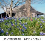 Bluebonnets And Early Texas...