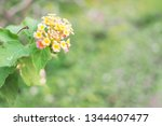 refreshing nature picture used... | Shutterstock . vector #1344407477
