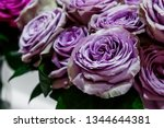 exotic roses from lilac elite... | Shutterstock . vector #1344644381