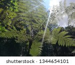 large branch of a tree  through ... | Shutterstock . vector #1344654101