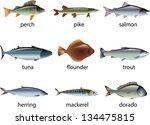 Fish Photo Realistic Vector Set